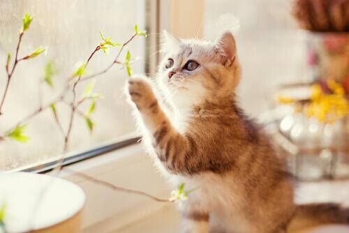 Gatti castrati e non: le differenze