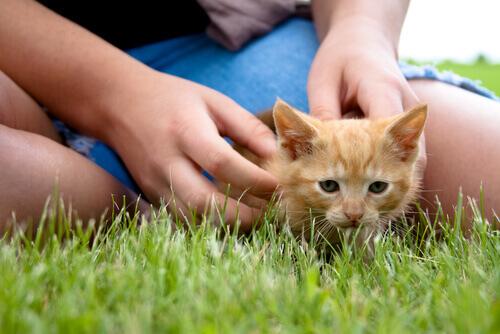 gatto-persona