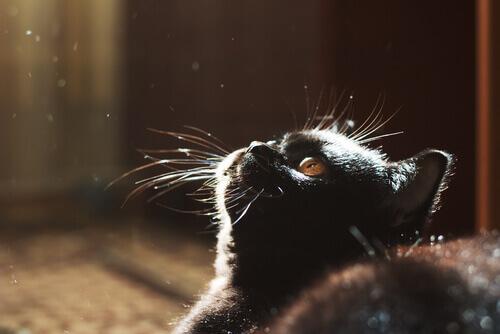 I gatti e il buio