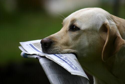 Owney, il cane viaggiatore