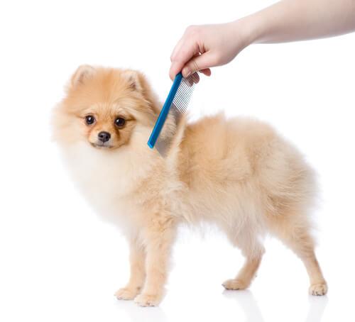 pettinare il cane