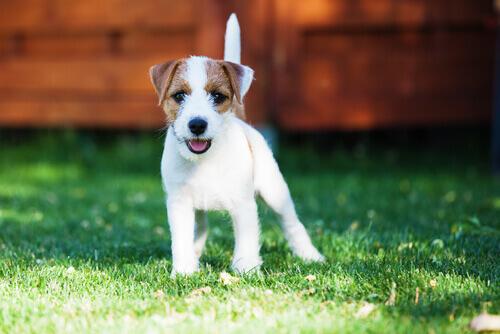 Il primo cane: come migliorare i rapporti in tempi record