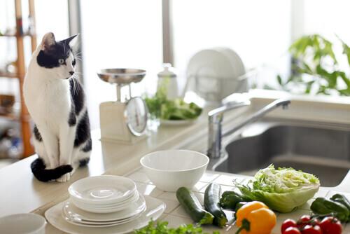 Animali sani, cucina pulita