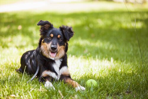 Il cane e i segnali calmanti
