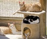 tiragraffi-adeguato-gatto