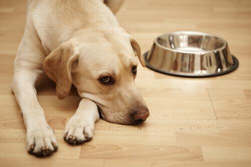 La tubercolosi nei cani