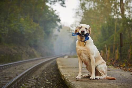 Viaggiare in treno con gli animali