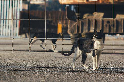 L'abbandono di animali