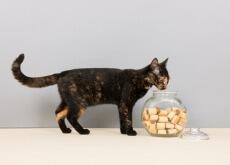 biscottini-gatto