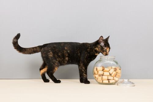 gatto sul tavolo e biscotti dentro ad un contenitore