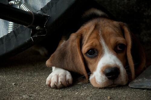 Qual è l'età media dei cani abbandonati?