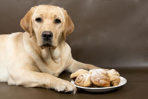 Aspetti benefici della cannella per i cani