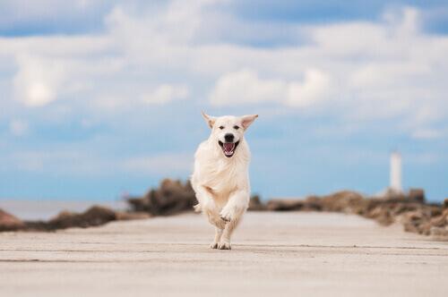 cane-correndo