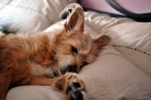 Cosa sognano i nostri cani?