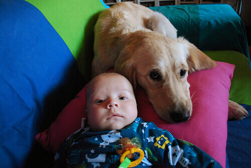 Una cagnolina allatta un bebè abbandonato
