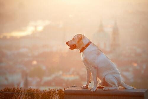 Cosa fare se si trova un cane smarrito?