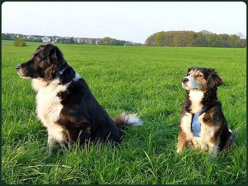 In ogni cane alberga un grande spirito