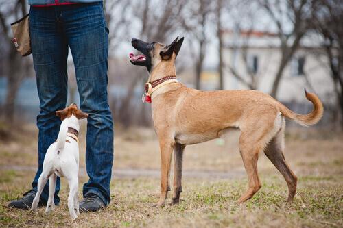 cani capiscono persone