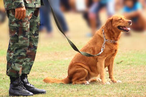 Cani da guerra