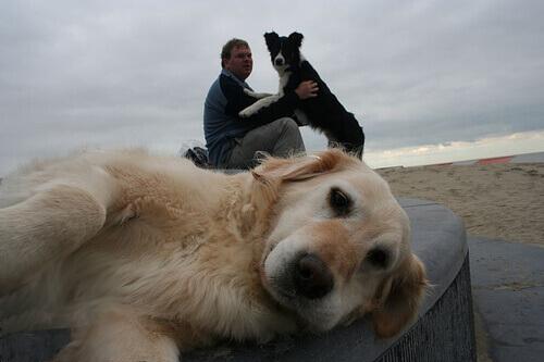 Come sapere se il vostro cane vi vuole bene