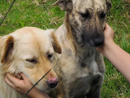 padrona accarezza cani