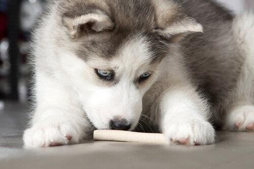 cibo-per-umani-a-cani
