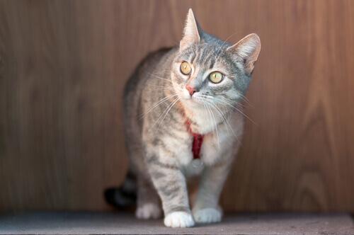 I rischi dei collari antiparassitari per gatti