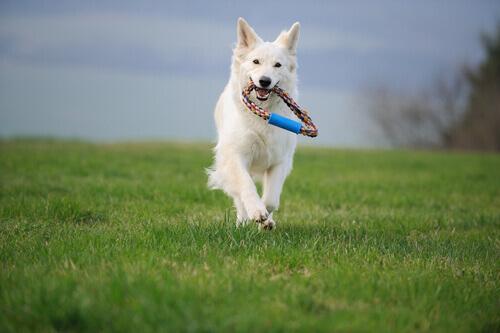 Quanto esercizio fisico devono fare i cani
