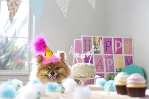 Una festa di compleanno per il vostro cane