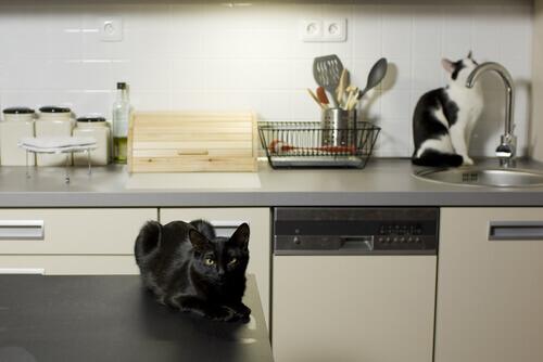 gatti-in-cucina