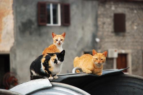 gatti-strada
