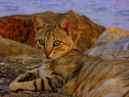 gatto-spiaggia