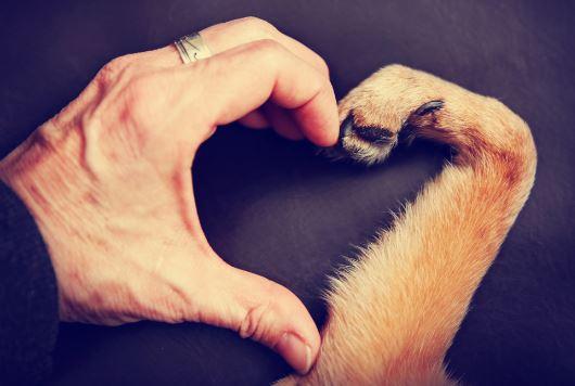 8 video sull'amore e il rispetto per gli animali