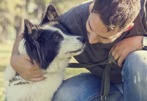 salvare un cane