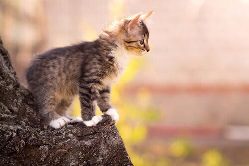 10 straordinarie abilità dei gatti