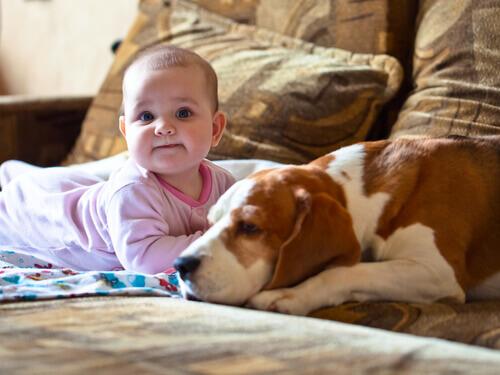 neonato e cane bianco e marrone
