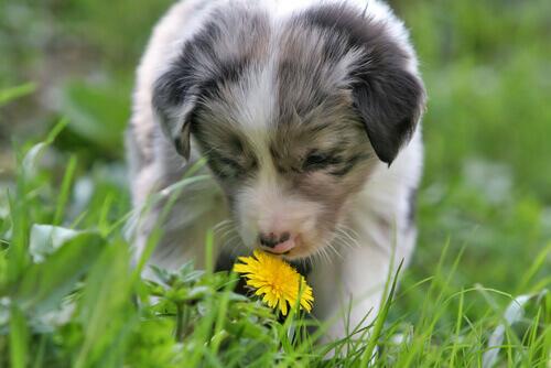 Odori che i cani detestano