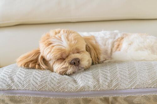 cane-dormendo1