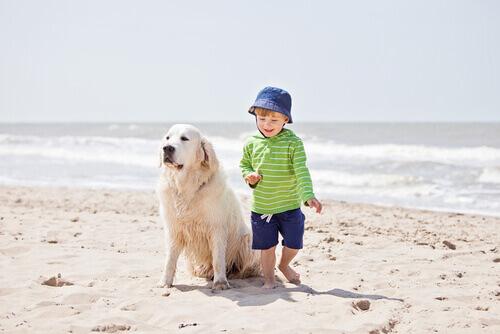 Cane salva bambino prima che finisca in mare