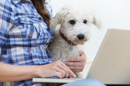 Avete un carattere simile a quello del vostro cane?