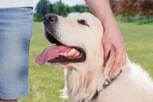 Perché il cane preme la testa contro gli oggetti?