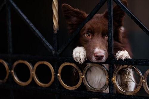 Furto di cani: come impedirlo?