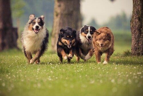 cani-scabbia