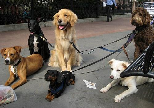 Psicologia canina: badateci