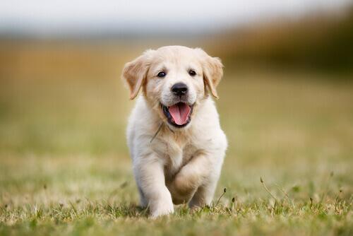 Falsi miti sul comportamento canino