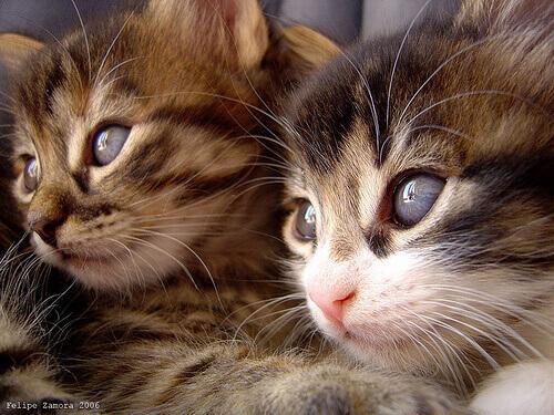 Sfatiamo alcuni miti sui gatti