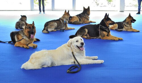 Cos'è la fisioterapia veterinaria?