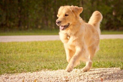 Il cane rappresenta il meglio di una persona