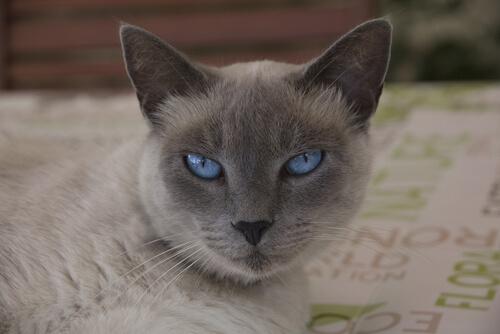 occhi-dei-gatti