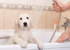 profumo-per-cani-bagno